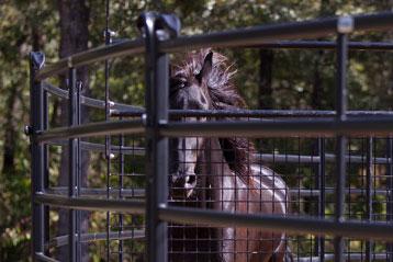 Priefert Horse Lead Walker