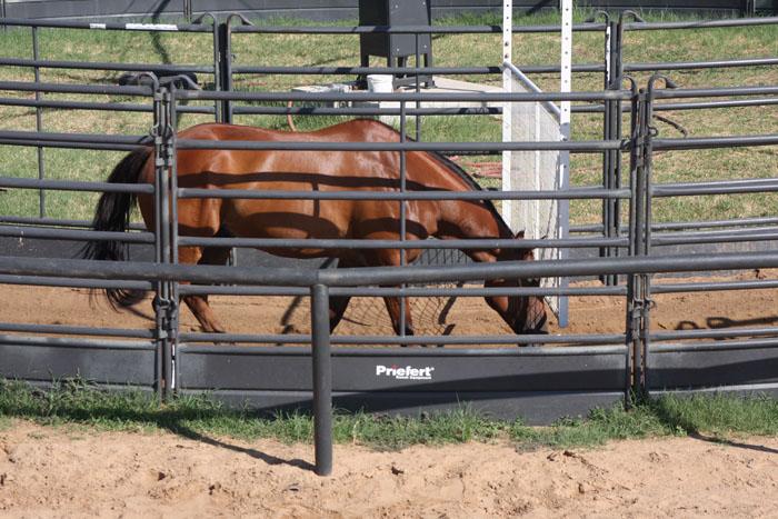 Horse Walker Round Pen